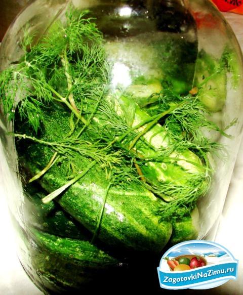Рецепт салатов зеленые помидоры и огурцы