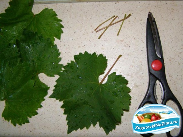 Что приготовить из маринованных виноградных листьев