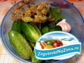 Рецепт засолки огурцов на зиму с пошаговыми фото