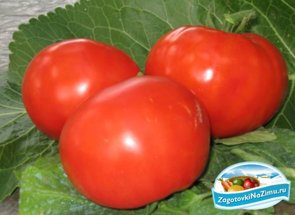 Как засолить помидоры на зиму