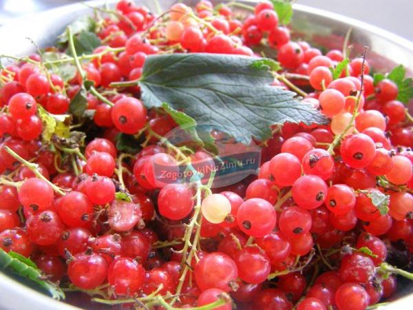 рецепт приготовления красной смородины с сахаром