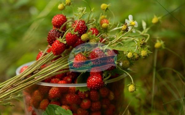 Лесная клубника на зиму: рецепты с пошаговыми фото