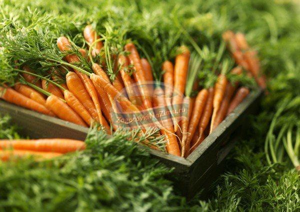 как хранить морковь: лучшие советы и идеи.