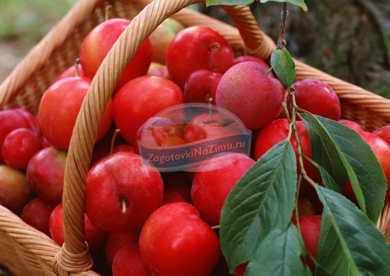райские яблочки компот рецепт приготовления