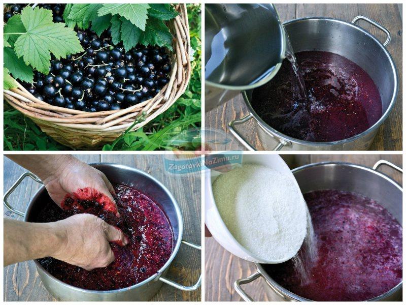 Вино из ягод черной смородины в домашних условиях 504